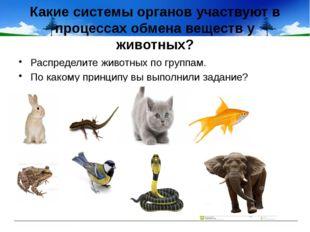 Какие системы органов участвуют в процессах обмена веществ у животных? Распре