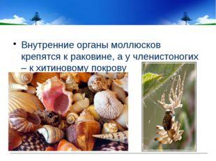 Внутренние органы моллюсков крепятся к раковине, а у членистоногих – к хитин