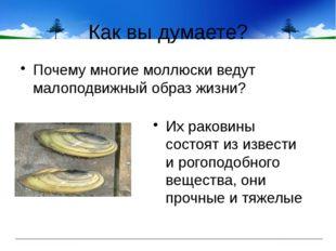 Как вы думаете? Почему многие моллюски ведут малоподвижный образ жизни? Их ра