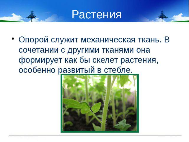 Растения Опорой служит механическая ткань. В сочетании с другими тканями она...