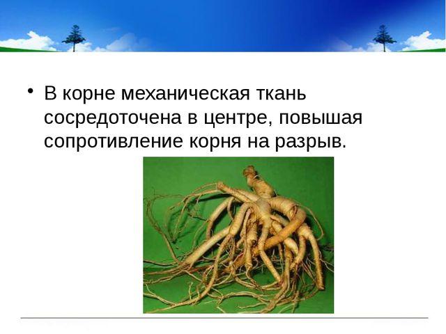 В корне механическая ткань сосредоточена в центре, повышая сопротивление кор...