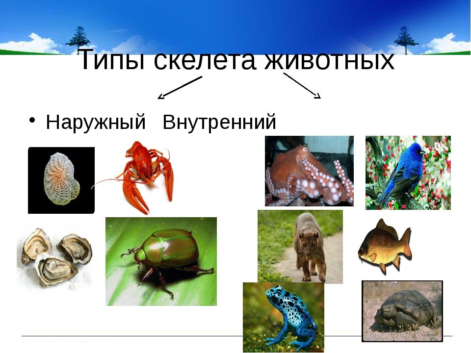 Типы скелета животных НаружныйВнутренний