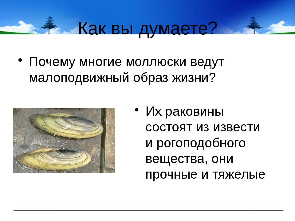 Как вы думаете? Почему многие моллюски ведут малоподвижный образ жизни? Их ра...