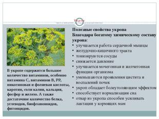 Укроп Укроп (от лат. аnethum graveolens) - одна из самых ценных культур сред