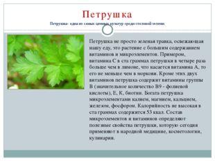 Петрушка Петрушка- одна из самых ценных культур среди столовой зелени. Петру