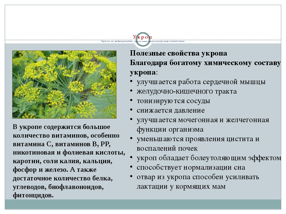 Укроп Укроп (от лат. аnethum graveolens) - одна из самых ценных культур сред...