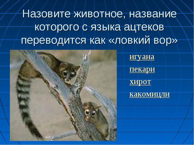 Назовите животное, название которого с языка ацтеков переводится как «ловкий...