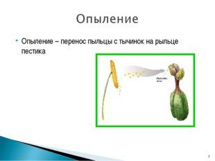 Опыление – перенос пыльцы с тычинок на рыльце пестика *