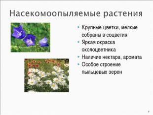 Крупные цветки, мелкие собраны в соцветия Яркая окраска околоцветника Наличие