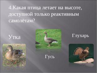 Утка Гусь Глухарь 4.Какая птица летает на высоте, доступной только реактивным