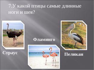 Страус Фламинго Пеликан 7.У какой птицы самые длинные ноги и шея?