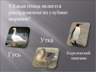 Гусь Утка Королевский пингвин 9.Какая птица является рекордсменом по глубине