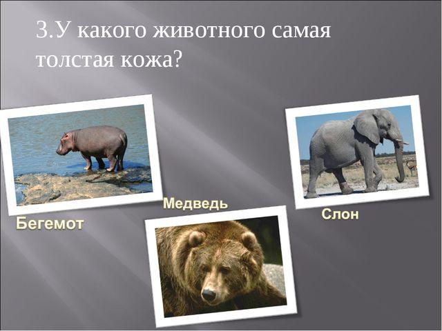3.У какого животного самая толстая кожа?