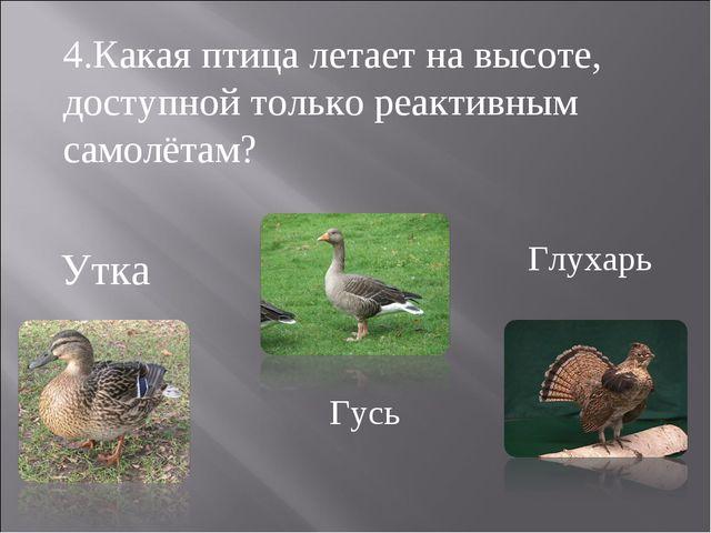 Утка Гусь Глухарь 4.Какая птица летает на высоте, доступной только реактивным...