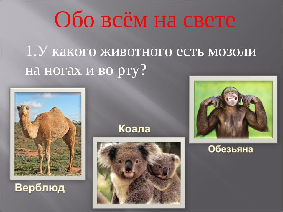 1.У какого животного есть мозоли на ногах и во рту? Обо всём на свете
