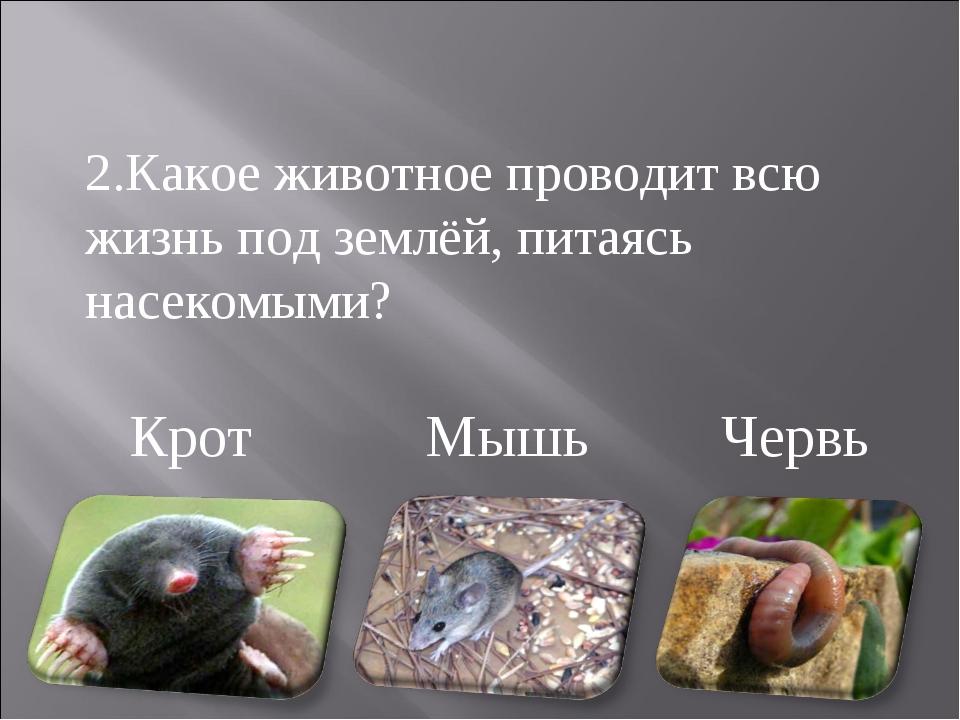 Крот Мышь Червь 2.Какое животное проводит всю жизнь под землёй, питаясь насек...