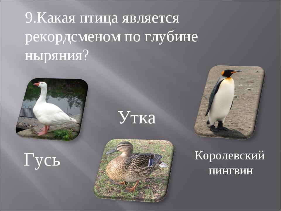 Гусь Утка Королевский пингвин 9.Какая птица является рекордсменом по глубине...