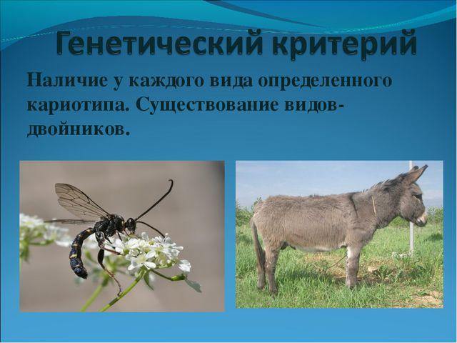 Наличие у каждого вида определенного кариотипа. Существование видов-двойников.