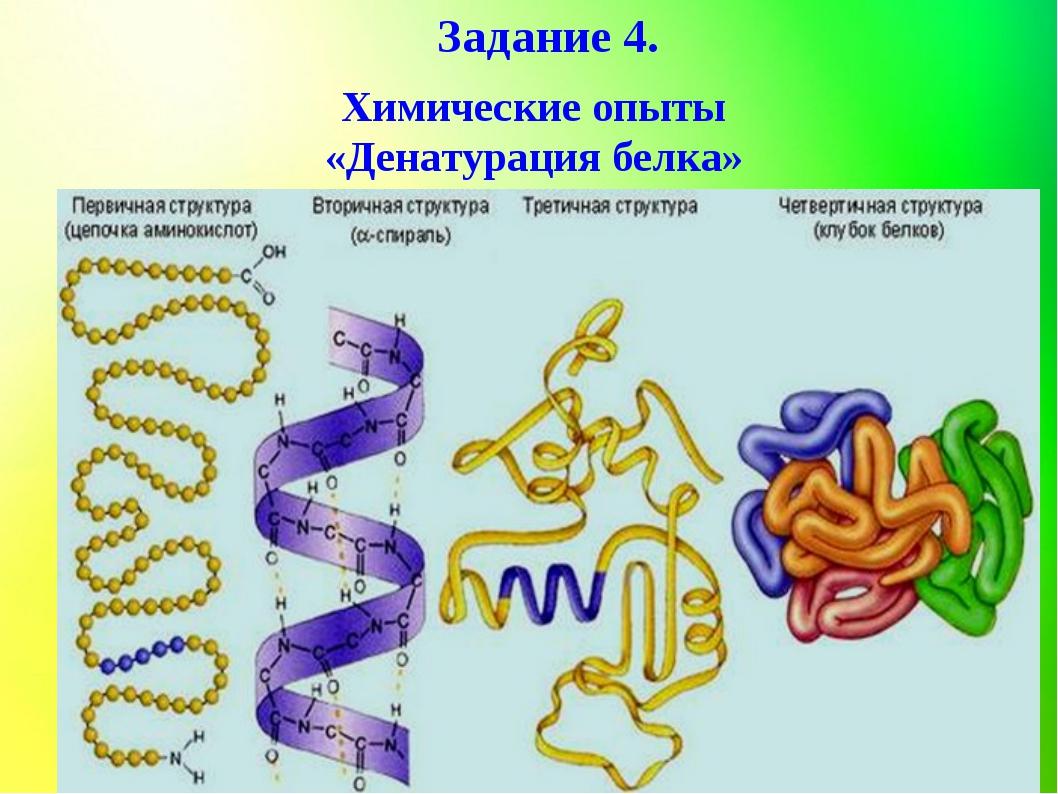 Задание 4. Химические опыты «Денатурация белка»