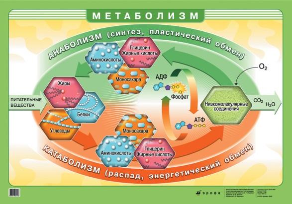 какие аминокислоты разганяют метаболизм Красноармейский район, Лазовский