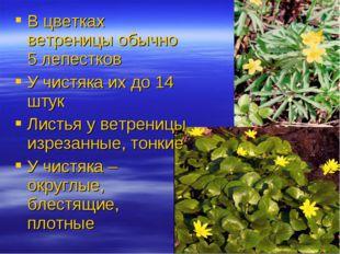 В цветках ветреницы обычно 5 лепестков У чистяка их до 14 штук Листья у ветре