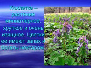 Хохлатка – растение миниатюрное, хрупкое и очень изящное. Цветки ее имеют зап