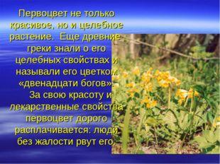 Первоцвет не только красивое, но и целебное растение. Еще древние греки знали