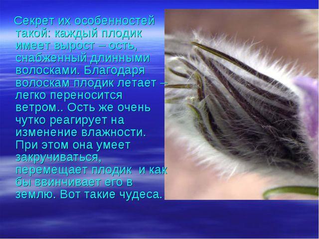Секрет их особенностей такой: каждый плодик имеет вырост – ость, снабженный...
