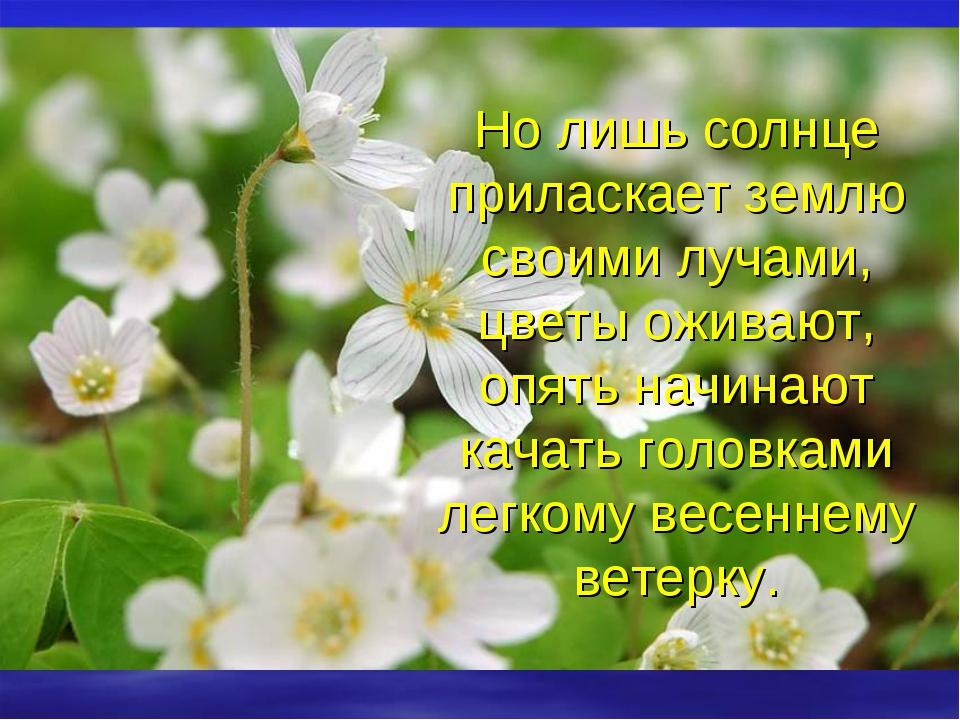 Но лишь солнце приласкает землю своими лучами, цветы оживают, опять начинают...