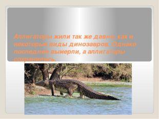 Аллигаторы жили так же давно, как и некоторые виды динозавров. Однако последн