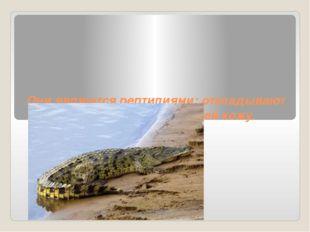 Они являются рептилиями: откладывают яйца, имеют покрытую чешуей кожу.