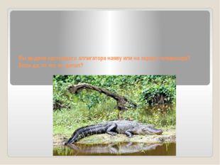 Вы видели настоящего аллигатора наяву или на экране телевизора? Если да, то