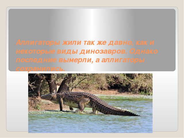 Аллигаторы жили так же давно, как и некоторые виды динозавров. Однако последн...