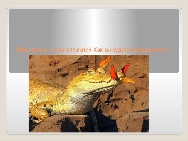 Представьте, что вы аллигатор. Как вы будете передвигаться?