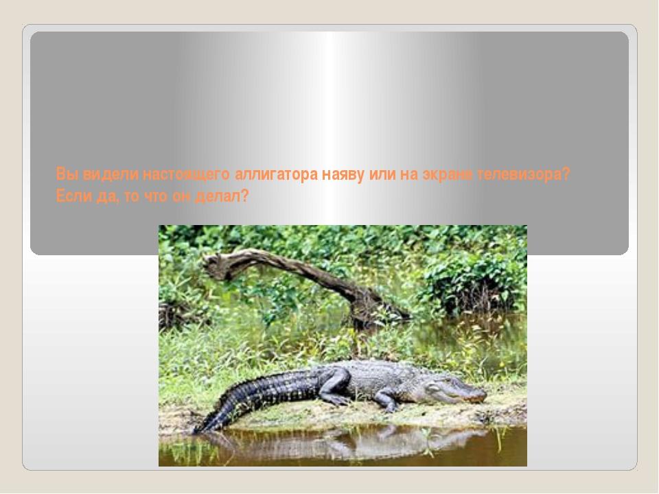Вы видели настоящего аллигатора наяву или на экране телевизора? Если да, то...