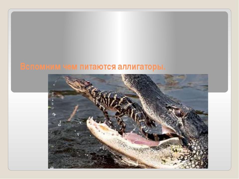 Вспомним чем питаются аллигаторы.
