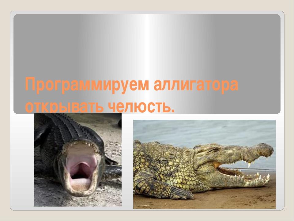 Программируем аллигатора открывать челюсть.