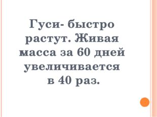 Гуси- быстро растут. Живая масса за 60 дней увеличивается  в 40 раз.