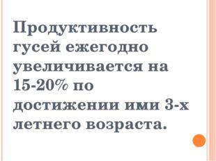 Продуктивность гусей ежегодно увеличивается на 15-20% по достижении ими 3-х л