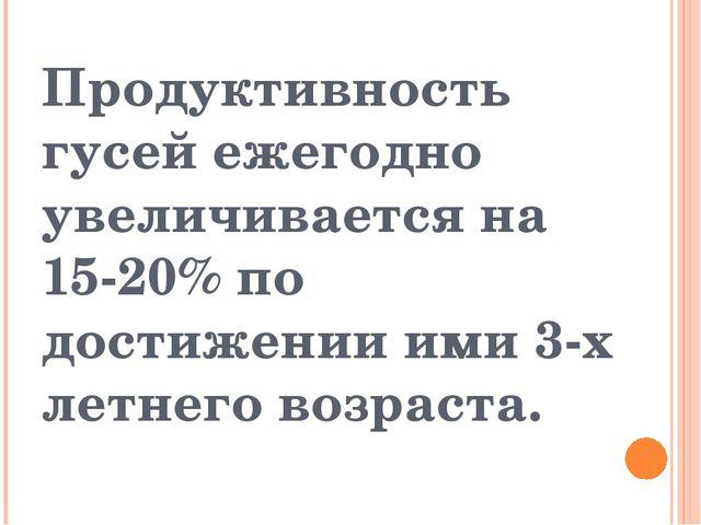 Продуктивность гусей ежегодно увеличивается на 15-20% по достижении ими 3-х л...