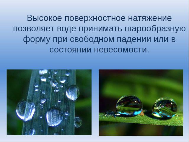 Высокое поверхностное натяжение позволяет воде принимать шарообразную форму п...