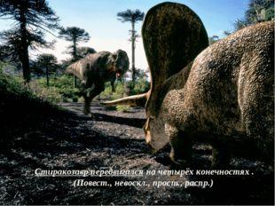 Стиракозавр передвигался на четырёх конечностях . (Повест., невоскл., прост.,