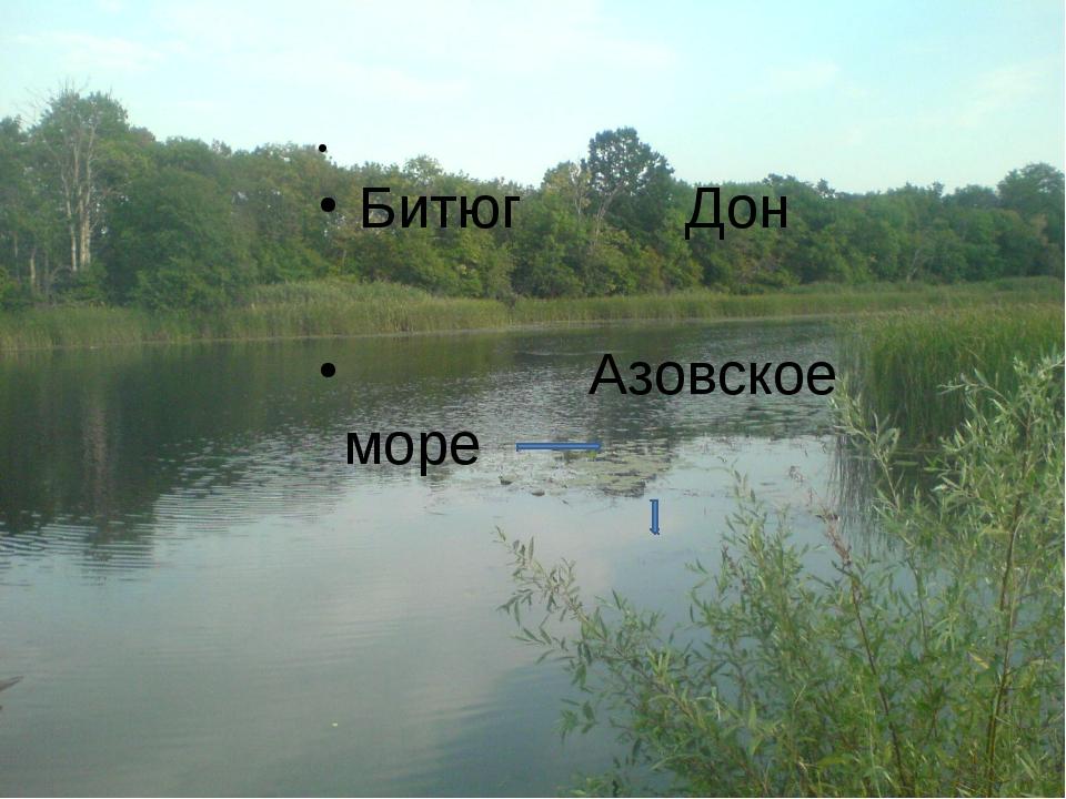 Битюг Дон Азовское море