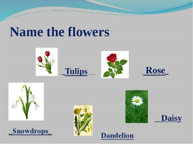 Name the flowers __Tulips___ _ Rose_ _Snowdrops_ Dandelion _ Daisy