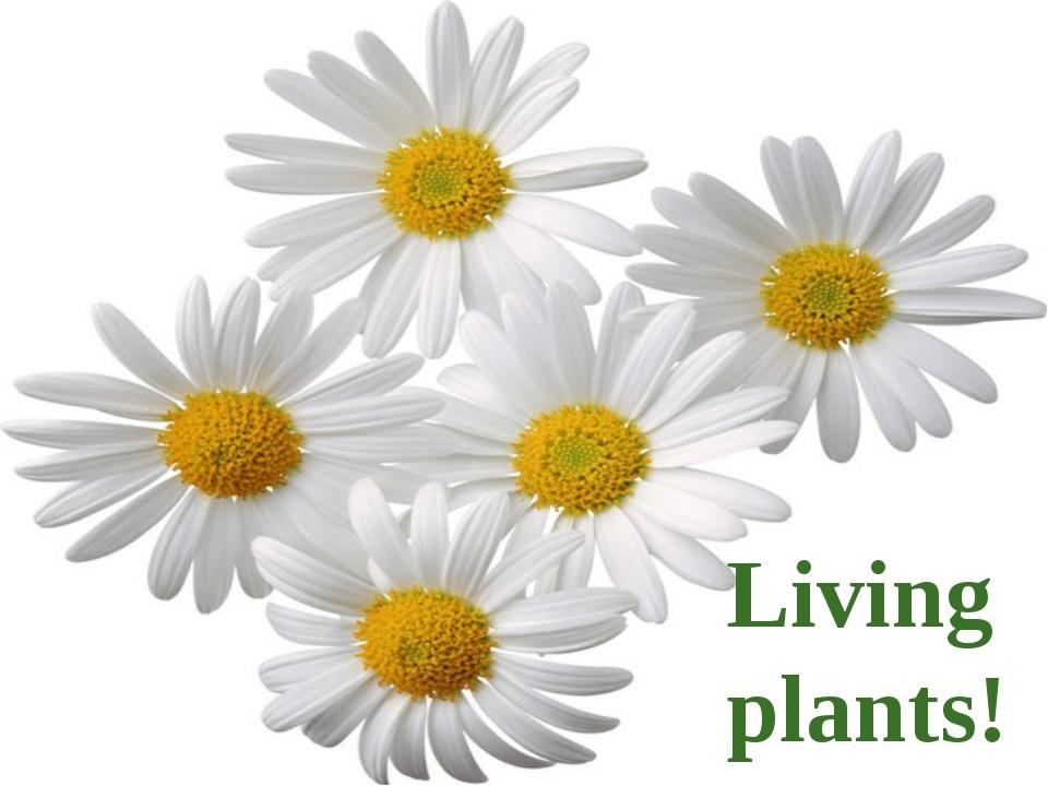 Living plants!