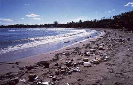 Загрязнение береговой линии