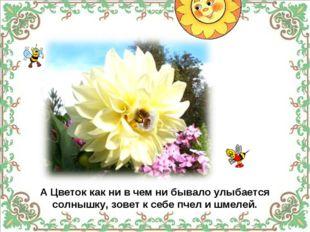 А Цветок как ни в чем ни бывало улыбается солнышку, зовет к себе пчел и шмел