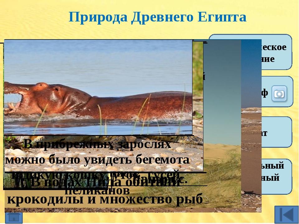 Синквейн (пять строк) 1 2 3 4 5 Древний Египет Верхний. Нижний объединили ра...