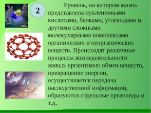 2 Уровень, на котором жизнь представлена нуклеиновыми кислотами, белками, уг