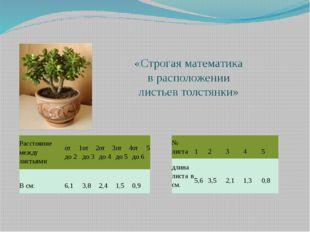«Строгая математика в расположении листьев толстянки» Расстояние между листья